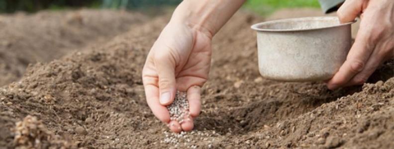 abonado para el cultivo del olivo