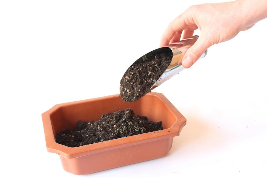 aplicación de tierra para maceta de olivo