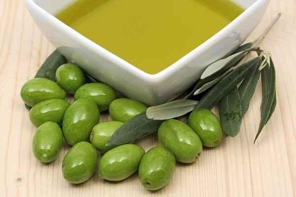 hojas del olivo colesterol