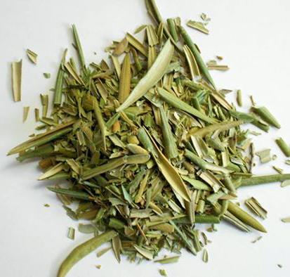 hojas de olivo para infusión