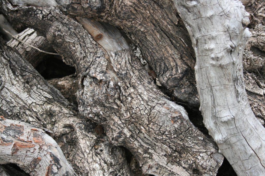 leña producto de la madera del olivo