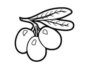 aceituna fruto del olivo