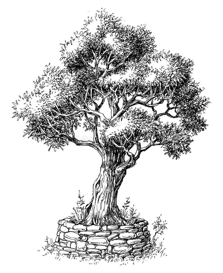 árbol de olivo dibujo