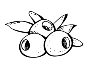 dibujo de aceitunas fruto del olivo