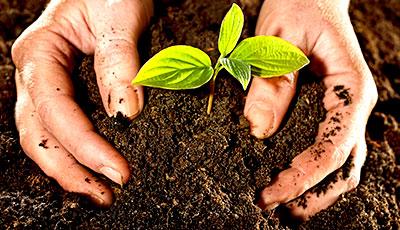 nutrición del suelo en olivos de maceta