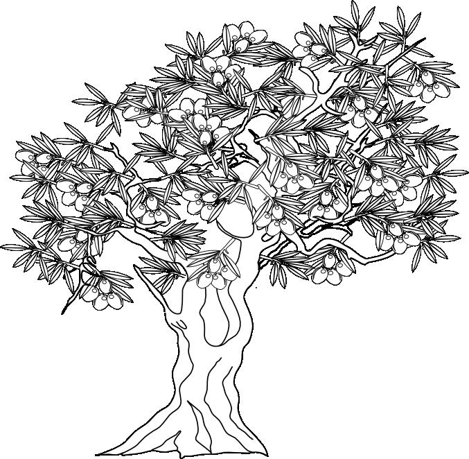 imagen de olivo formato png
