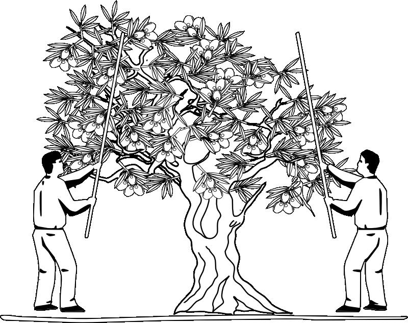 árbol de olivo formato png