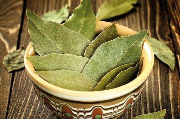 propiedades hoja del olivo