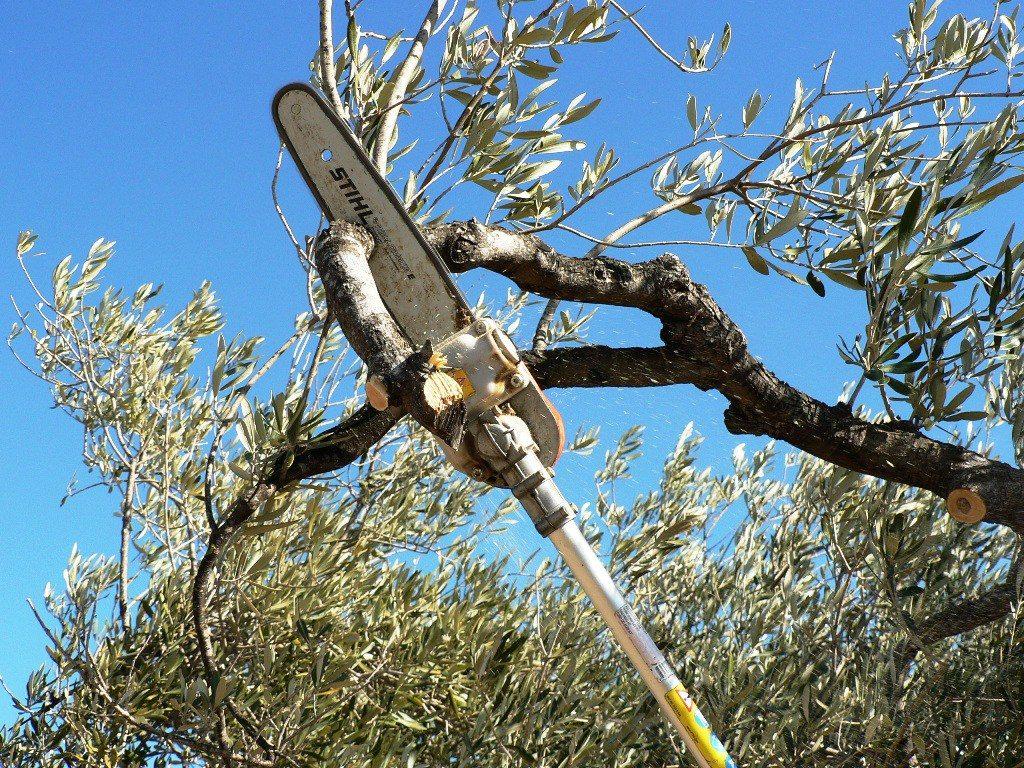 poda del olivo herramientas pesadas
