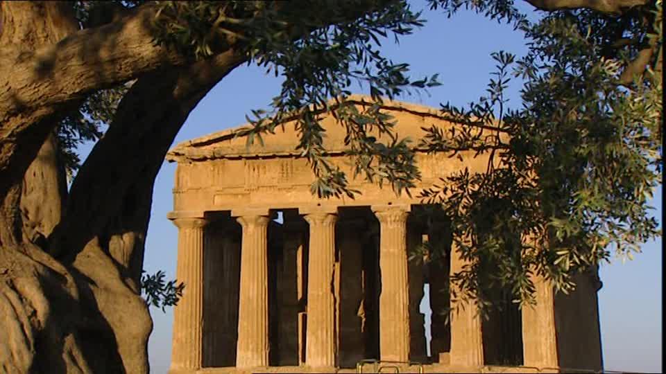 rama de olivo en la antigua grecia